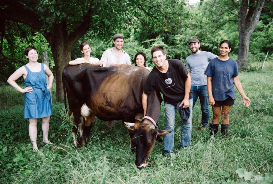 Weckerly with Cows