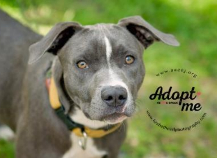 Adopt Carrie