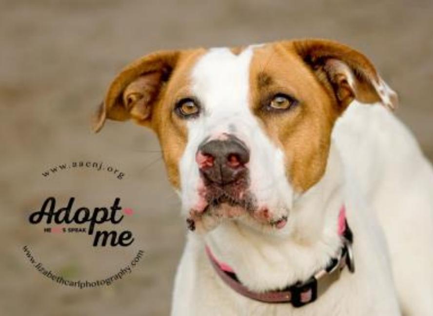 Adopt Sadie